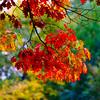 Beautiful colorful oak leaves, autumn day