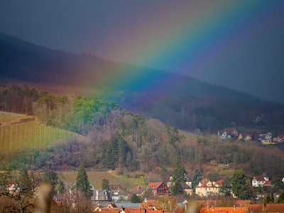 Stunning rainbow over the village and vineyards in Alsace on the background of the Vosges mountains. Spring landscape.