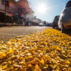 stunning colors of autumn in the city of Strasbourg. Colored leaves, warm sunlight.