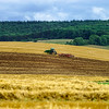 Wide panoramic view of colorful field, nature and agriculture