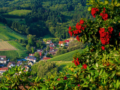 Little cozy german village between the green hills, vineyards in Black Forest
