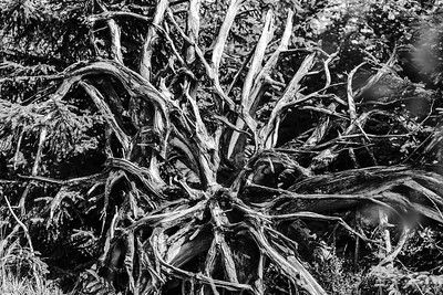 Abstract monochrome view of old natural roots