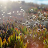 Field of beautiful wild flowers