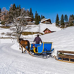 Horse-taxi in highh mountains ski resort