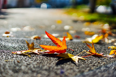 Autumn in the city, yellow and red leaves on the ground
