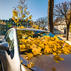 Yellow foliage over the car parked on the street, autumnal cityscape