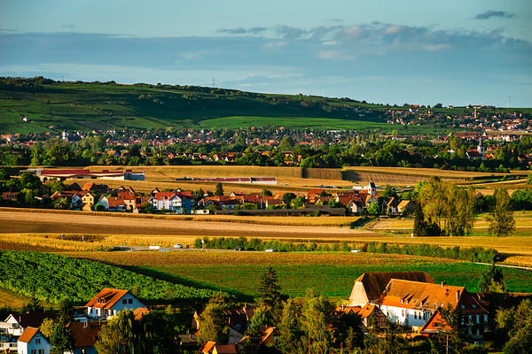 Beautiful hills with vineyards in Alsace, France. Sunset time. Vivid colors and shadows on the hills.