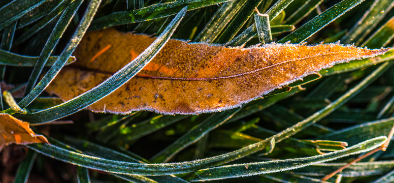 December Frost 16
