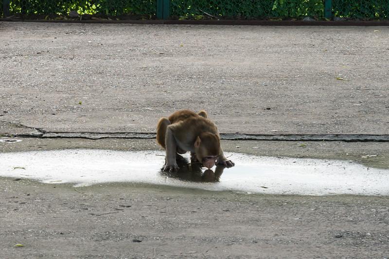 Monkey Puddle?