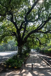 Delhi_Nov2018-004