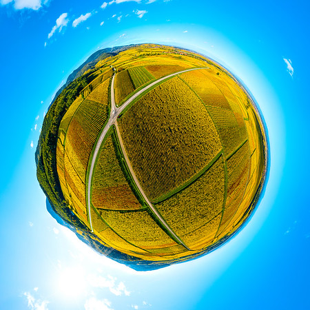 A circular spherical panorama of autumn vineyards in Alsace. Projection. Blue sky and bright yellow ball.