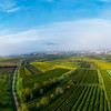 A drone panoramic view of the stunning expanse of the Vosges foothills. Autumn vineyards in the morning fog.