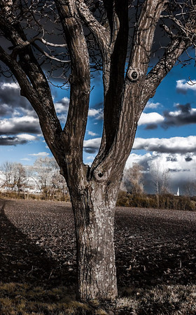 Infrared contrast portrait of beautiful tree