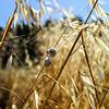Dry wild grass on the fields