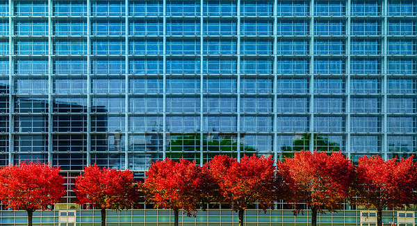 European Parliament in Strasbourg, autumnal view with red trees