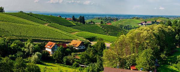 Wide hires panoramic landscape view of Black Forest vineyard valley