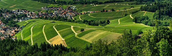 Wide hires panoramic landscape view of Black Forest vineyard valley, aerial