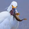 A slimy Taco.<br /> #birds #igbirds #birding #birdnerd #birdwatching #birdwatcher #birdphotographer #birdphotography #pocket_birds #birdsofinstagram #naturelovers #naturephotos #naturephotography #naturephotographer #wildlife_captures #wildlifephotography #wildlifephotographer #featheredfriends #welovebirds #nikond500 #nikonnature #nikonnofilter #eye_spy_birds #birdbrilliance #yourbestbirds