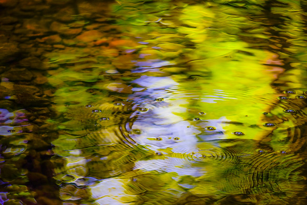 REFLECT  12