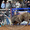 Bull Fighter-WBR_8958