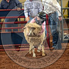 Mutton Busting-WBR_9300