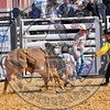 Bull Fighters-DSC_1583