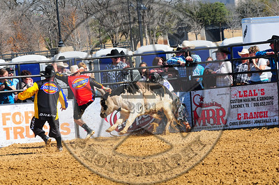Bull Fighters-DSC_1408