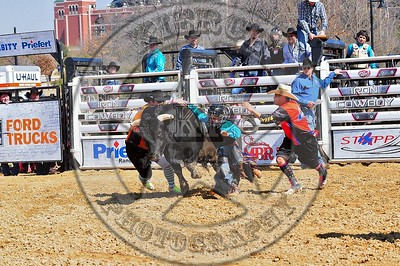 Bull Fighters-DSC_1552