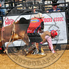 Bull Fighters-DSC_1747