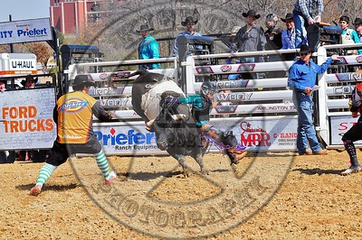 Bull Fighters-DSC_1551