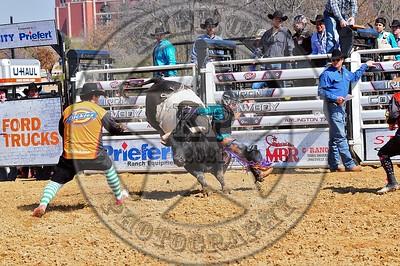 Bull Fighters-DSC_1551