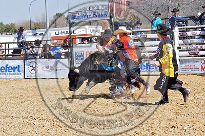 Bull Fighters-DSC_1553