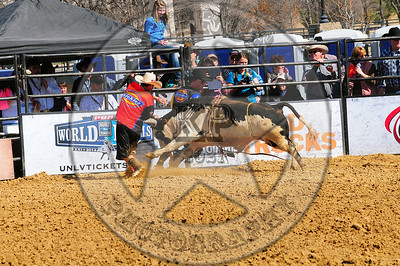 Bull Fighters-DSC_1409
