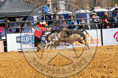 Bull Fighters-DSC_1409