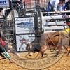 Bull Fighters-DSC_1584