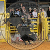 STERLING YANCY-PBR- (97)