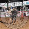 BREWSTER GUIN-PRCA-CL-TH- (84)