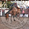 CODY ZIOBER-46 COOL WATER-PRCA-KL-FR- (50)