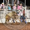 BULL FIGHTER-PRCA-SF-FR- (103)