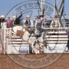 JACE LANE-767 PAINTED COAST-PRCA-SF-FR- (42)