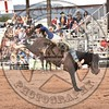 KYLE CHARLEY-820 BROWN SUGAR-PRCA-SF-WD- (91)