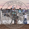 PETER WHITE-H106 BLUE SWAN-PRCA-SF-SA- (75)