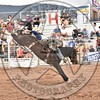KYLE CHARLEY-820 BROWN SUGAR-PRCA-SF-WD- (92)