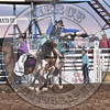 TANNER LOCKHART-652 PAINTED BEAR-PRCA-SF-SA- (70)