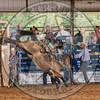 TAYLOR PRICE-P37 HAPPY TRAILS-PRCA-TL-SN- (88)