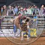 MIKE SOLBERG-H03 SWEET FAME-PRCA-BT-TH- (58)