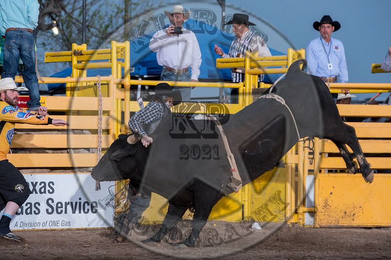 MATT HALBERT-222 PRETTY BOY-PRCA-LF-SA- (38)