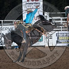 SHANE PROCTOR-D134 TEQUILA GOLD-PRCA-SG-TH- (83)