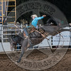 SHANE PROCTOR-D134 TEQUILA GOLD-PRCA-SG-TH- (86)
