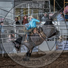 SHANE PROCTOR-D134 TEQUILA GOLD-PRCA-SG-TH- (87)